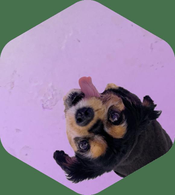 Team-Basil